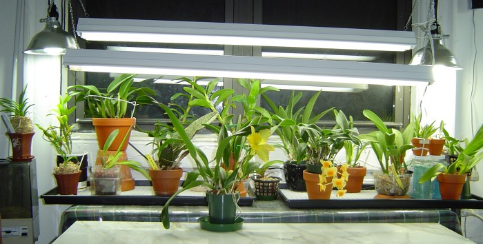 Welcome to - Houseplants thrive low light youre window sill ...