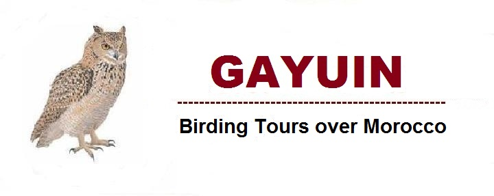GAYUIN Birding Tours over Morocco