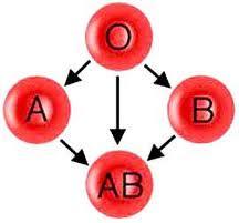 Ramalan Berdasarkan Golongan Darah