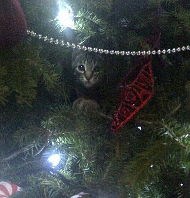 chat, décoration de Noël, arbre de Noël