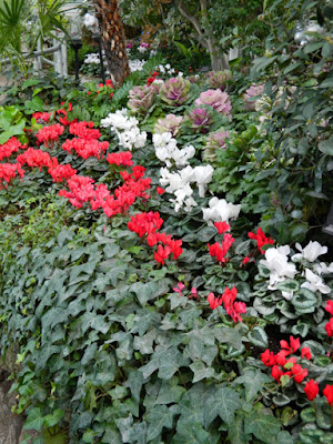 Allan Gardens Conservatory Christmas Flower Show 2015 red white cyclamen by garden muses-not another Toronto gardening blog