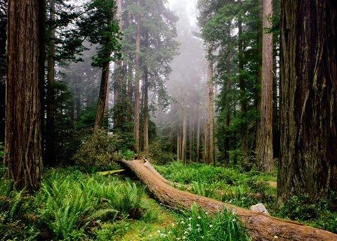 Download HD Forest Desktop Wallpaper