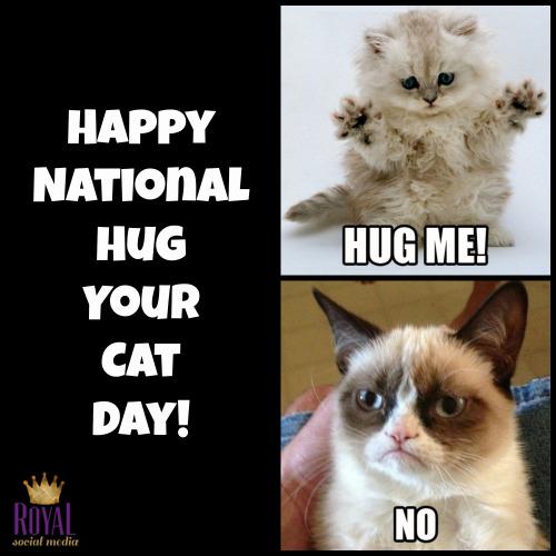 National+Hug+Your+Cat+Day royal social media national hug your cat day!