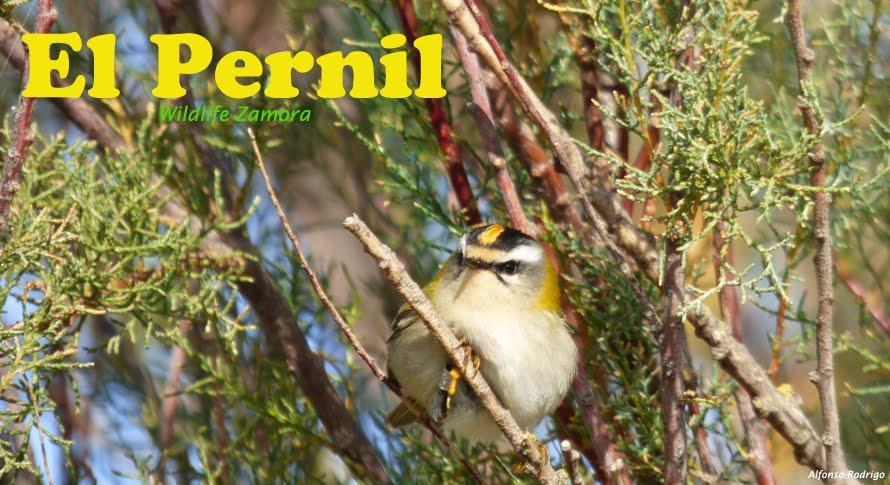 El Pernil