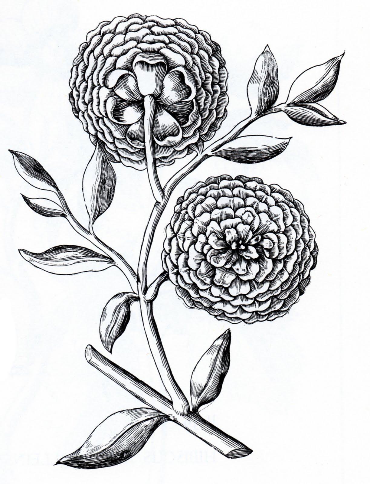 Vintage Black And White Flower Clip Art The Moth