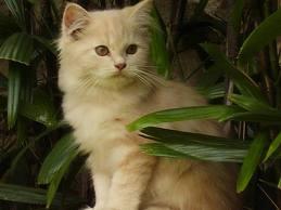 Menjaga Kesehatan Kucing Tua