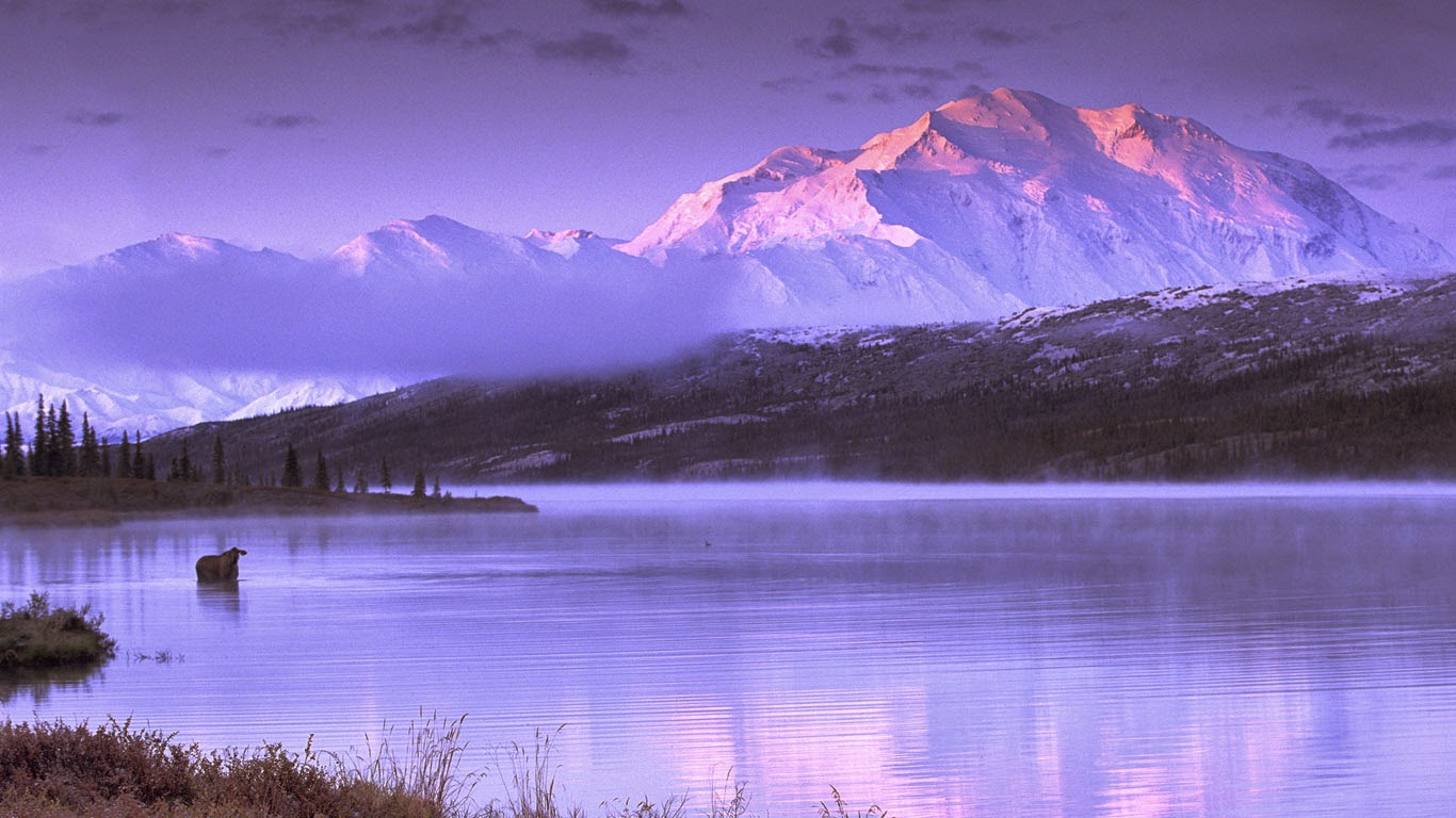 Moose wading in Wonder Lake, Denali National Park and Preserve, Alaska (© Ira Meyer/Getty Images) 185