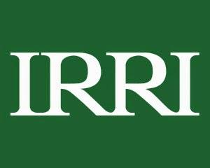 International Rice Research Institute (IRRI) Vacancy: Postdoctoral Fellow - Plant Pathology, Bujumbura - Burundi
