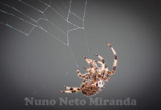 """alt=""""aranha, spider, teia, web, seda das aranhas, spider silk"""""""