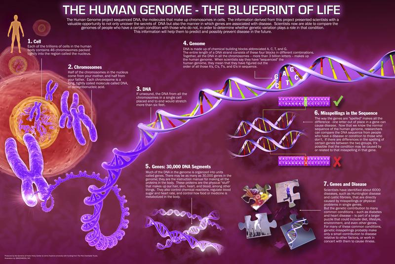 Human genome project research paper