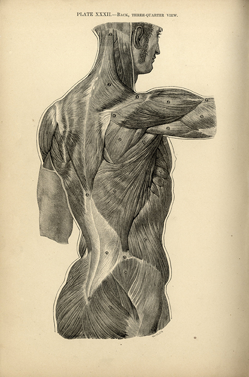 Research Of Artistic Anatomy Update John Cl Sparkes A Manual Of