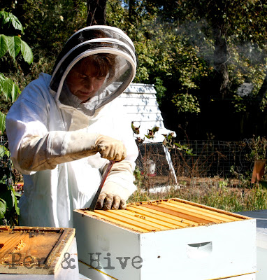beekeeper inspecting hives