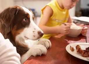 Xin thức ăn. Bạn có thể ngăn chặn điều này bằng cách không bao giờ bỏ thức ăn cho chó khi đang ăn. Bạn có thể đưa chúng ra khỏi phòng trong khi bạn ăn hoặc đưa chúng vào chuồng của mình. Hoặc dạy cho chúng đi đến một nơi đặc biệt, khi bạn ăn.