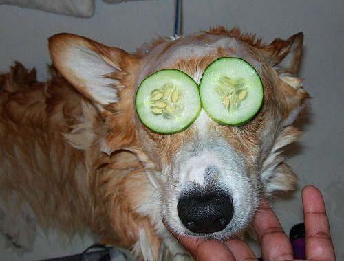 Fotos de perros pequeños y grandes muy divertidas