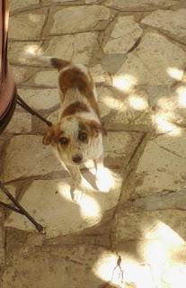 Χαθηκε Τριτη βραδυ απο την Πετρουπολη  θηλυκό σκυλάκι, έξι μηνών με μαύρο λουράκι στο λαιμό