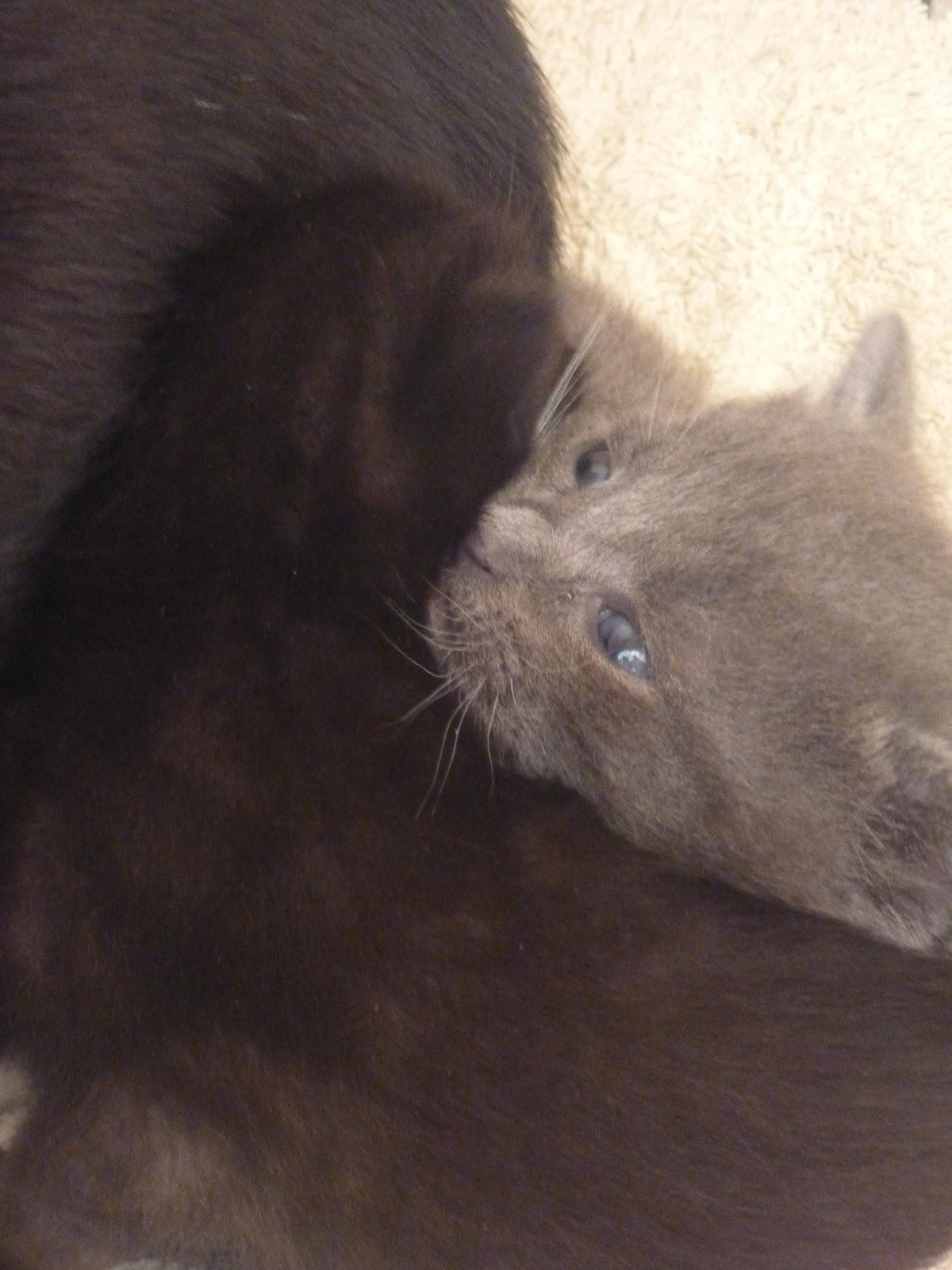 Lost Black Cat Sunderland