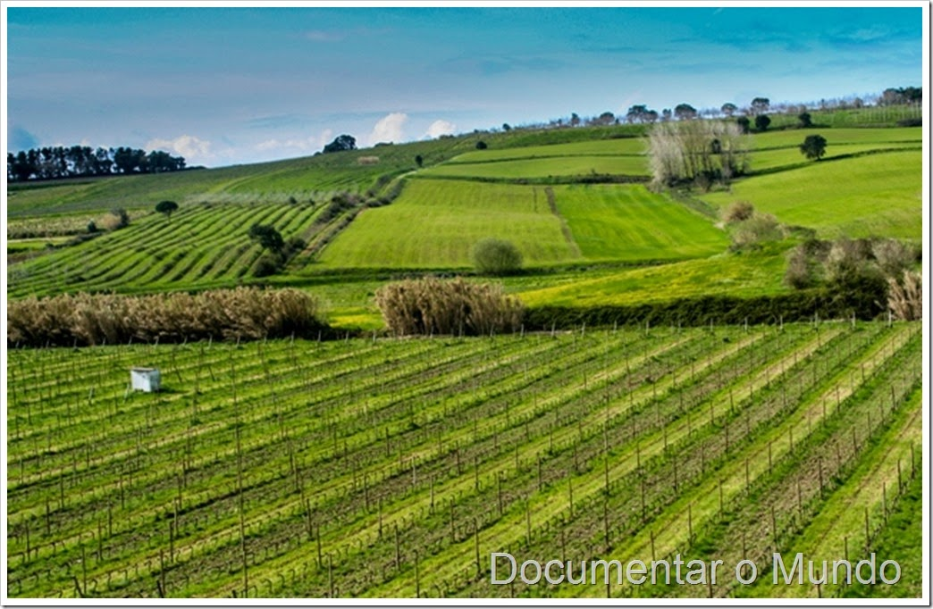 Quinta do Monte D'Oiro; Enoturismo no Oeste; Vinho regional de Lisboa