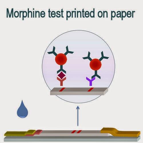 Morphine Essays (Examples)