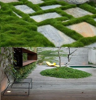 Zoysia tenuifolia pasto alfombra verde jard n for Diseno jardines sin pasto