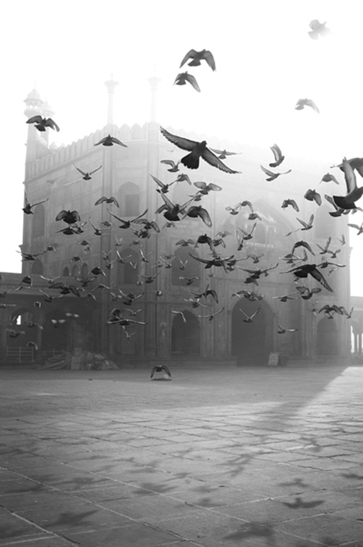 flying birds, black and white image