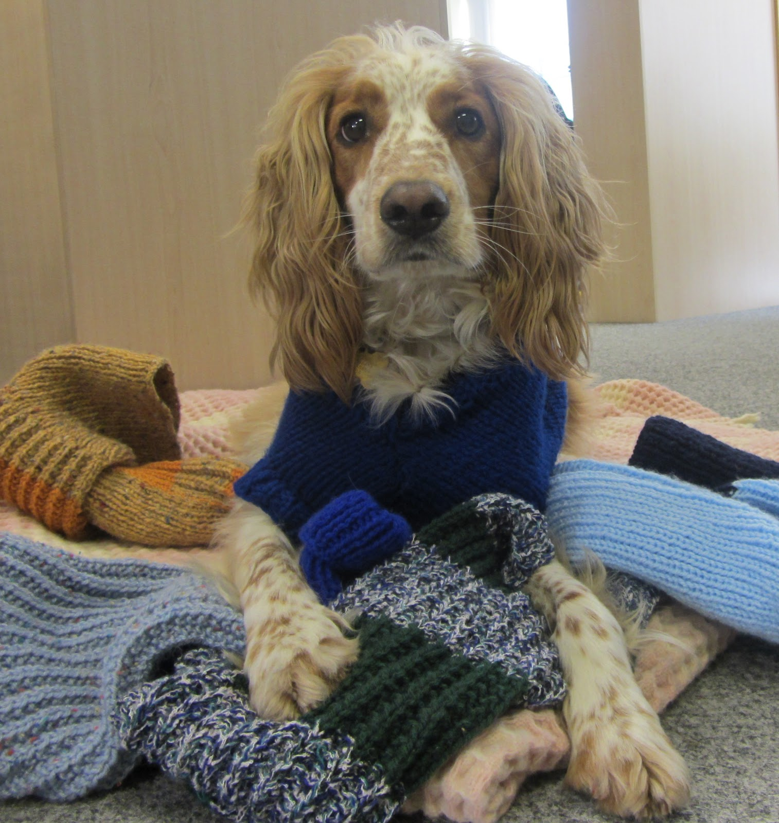 Dogs Trust Calling All Knitters To Keep Canines Cosy