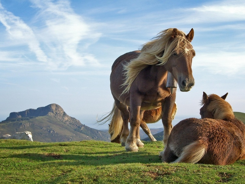wild horse hd wallpapers - photo #46