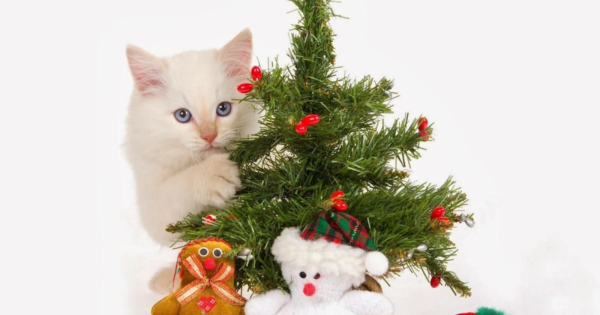 cat christmas gift wallpapers beautiful desktop