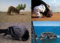 15- Göklerde ve yerde bulunanlar da onların gölgeleri de sabah akşam ister istemez sadece Allah'a secde ederler.