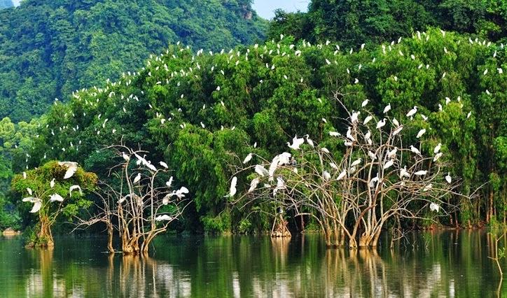 Thung nham vườn chim Tam Cốc Bích Động