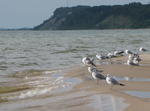 gulls on beach