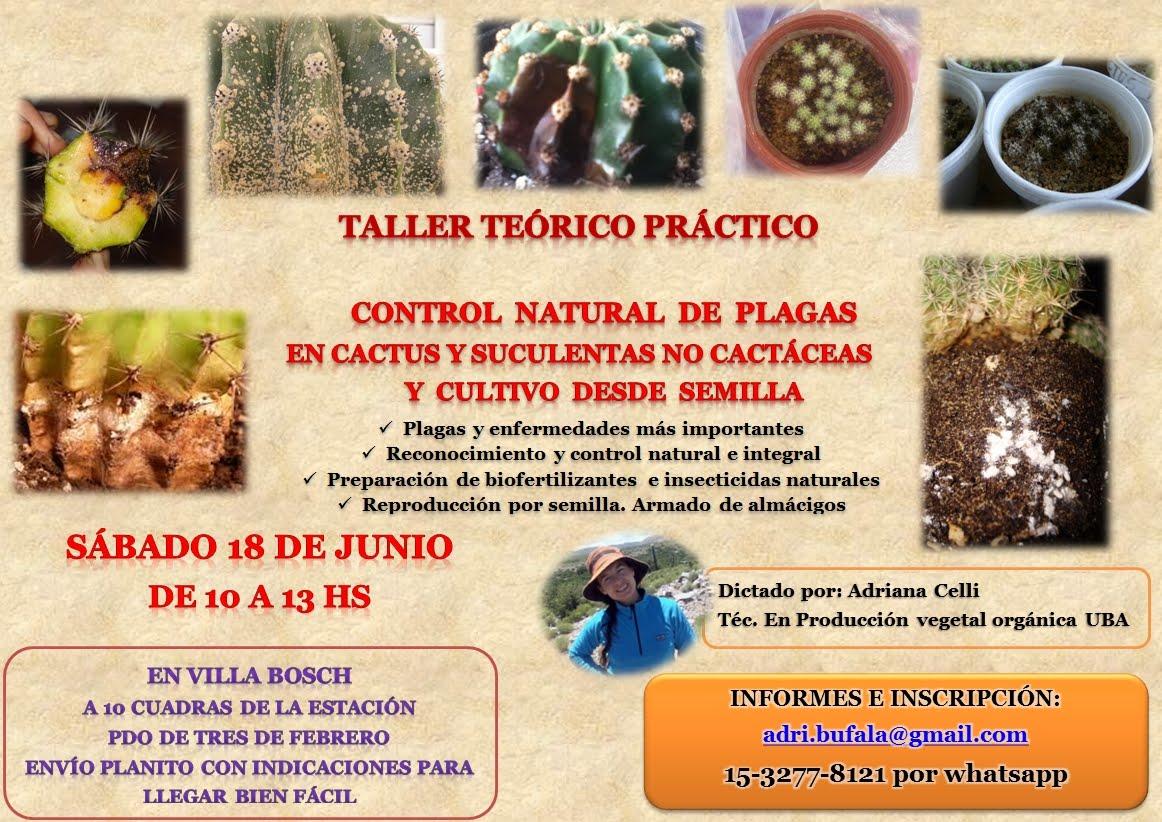 BASTA DE PLAGAS EN TUS CACTUS Y SUCULENTAS >18 de JUNIO 10 HS EN VILLA BOSCH