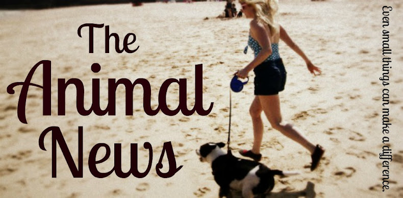 The Animal News