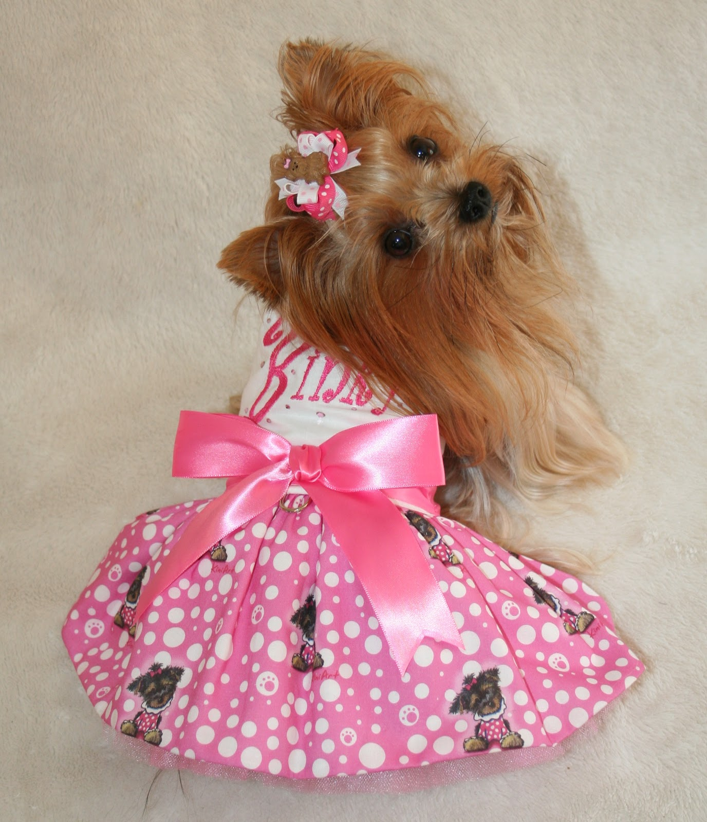 1000 Images About Cute Yorkies On Pinterest