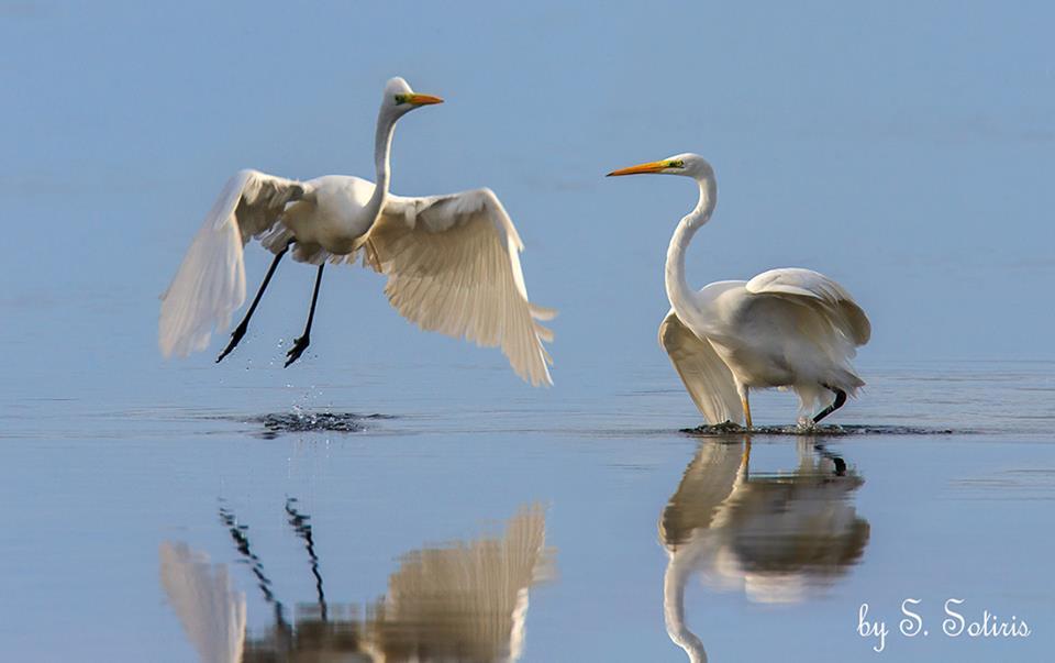 Φλαμίνγκος: Τα πουλιά της αγάπης