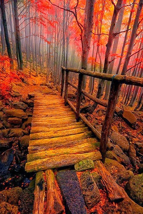 Forest Bridge Wallpaper HD For Android