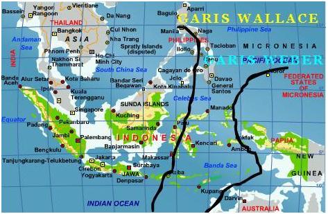 Peta Persebaran Fauna Indonesia berdasarkan Garis Wallace dan Garis ...