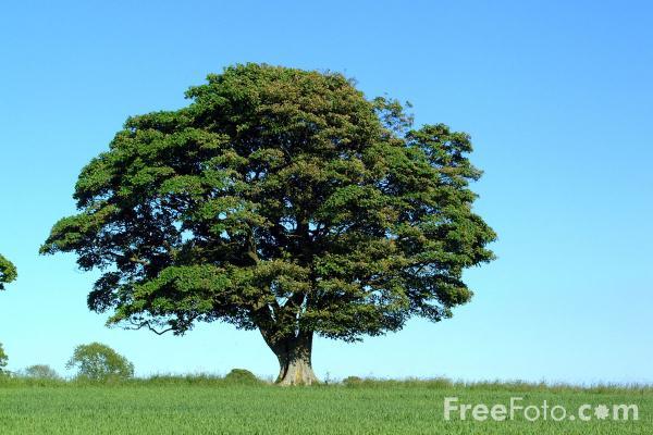 Hikmah dari sebuah pohon