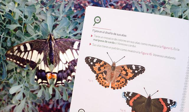 reconociendo mariposa