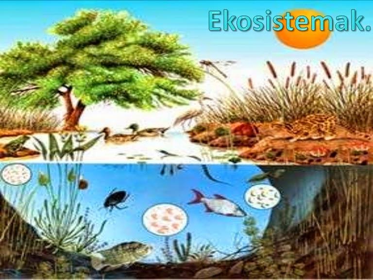 http://agrega.hezkuntza.net/visualizar/eu/es-eu_2011090633_2230103/false