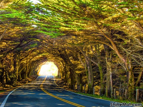 Natural Tree Tunnel, Mendocino County, California, USA