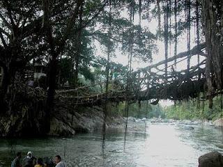 7 Pohon Dengan Bentuk Aneh dan Unik Yang Ada di Indonesia