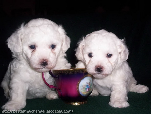 pictures of cute puppies 3