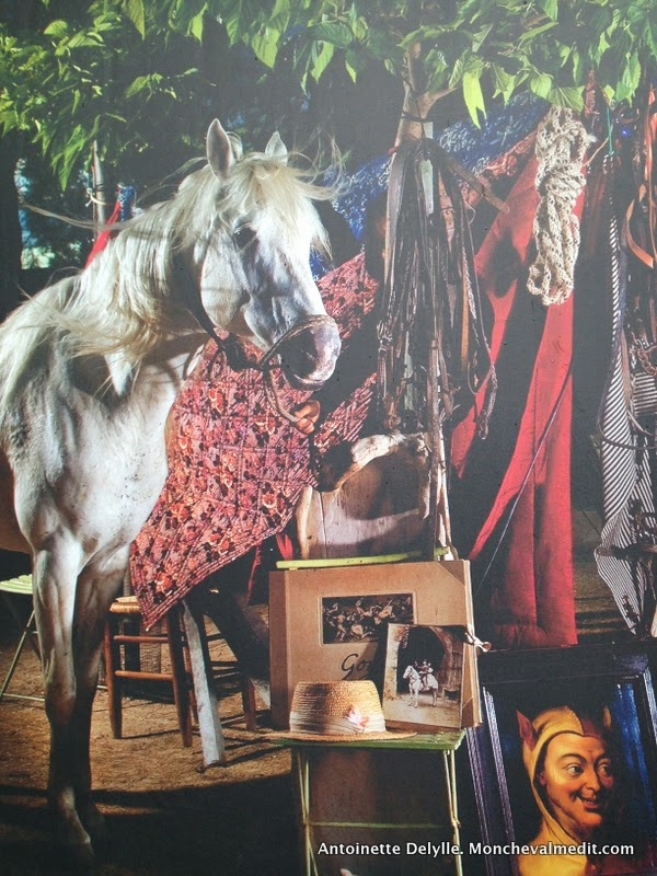 rencontres milieu cheval