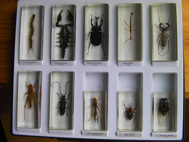 giant centipede scorpion stick insect collection