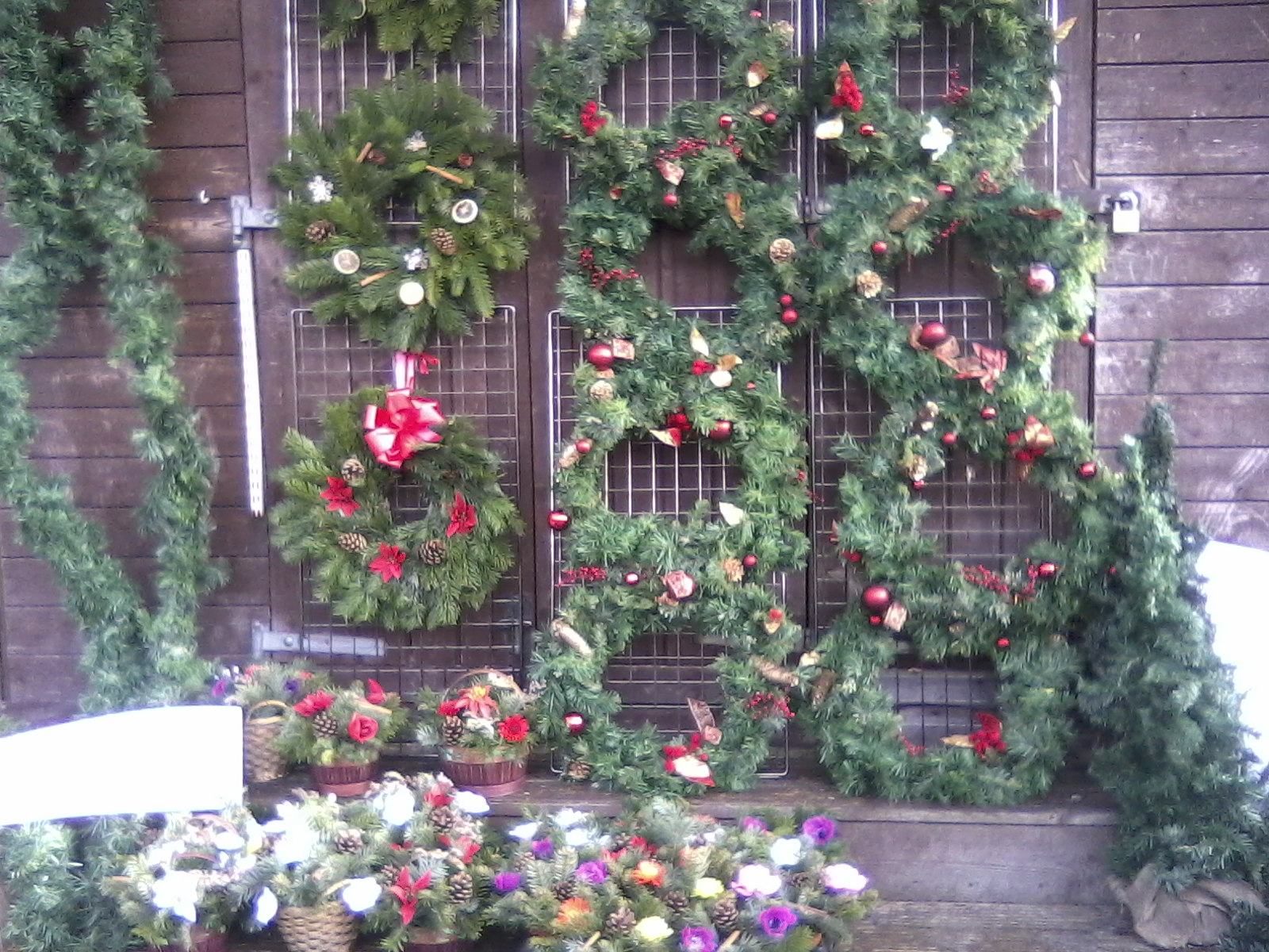 Glossop outdoor market trees wreaths and other christmas