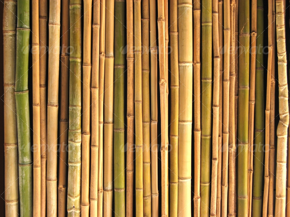 Bamboo Reeds Bamboo Valance Photo