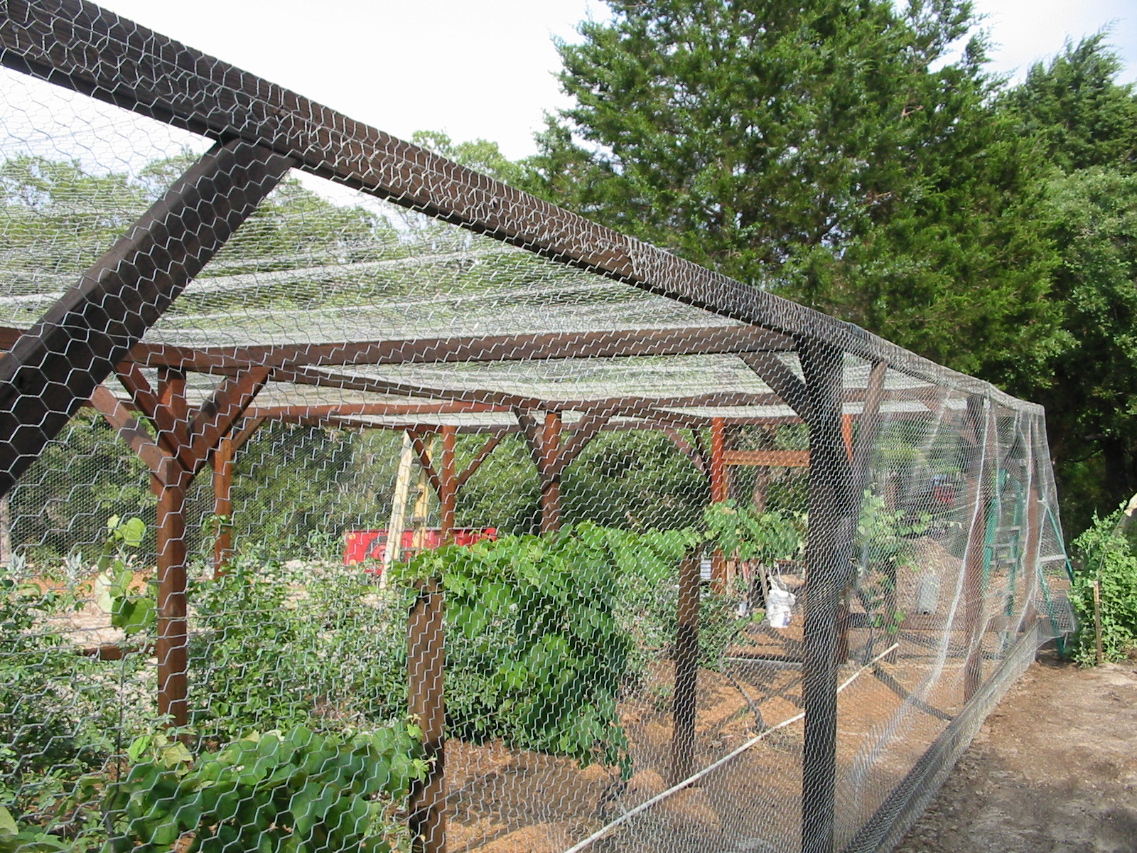 Turtle Ranch Tales Finishing the garden cage