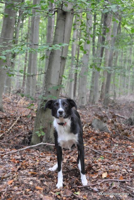 Ralph in the forest, Frankfurt, Germany