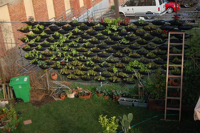 Horta vertical em sacos de lixo
