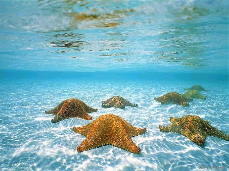 Denizin dibinde ufacık bir balığım ben o koskoca ulu denizde